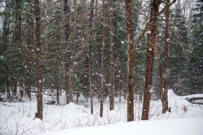 El nevar en un bosque del invierno fotografía de archivo libre de regalías