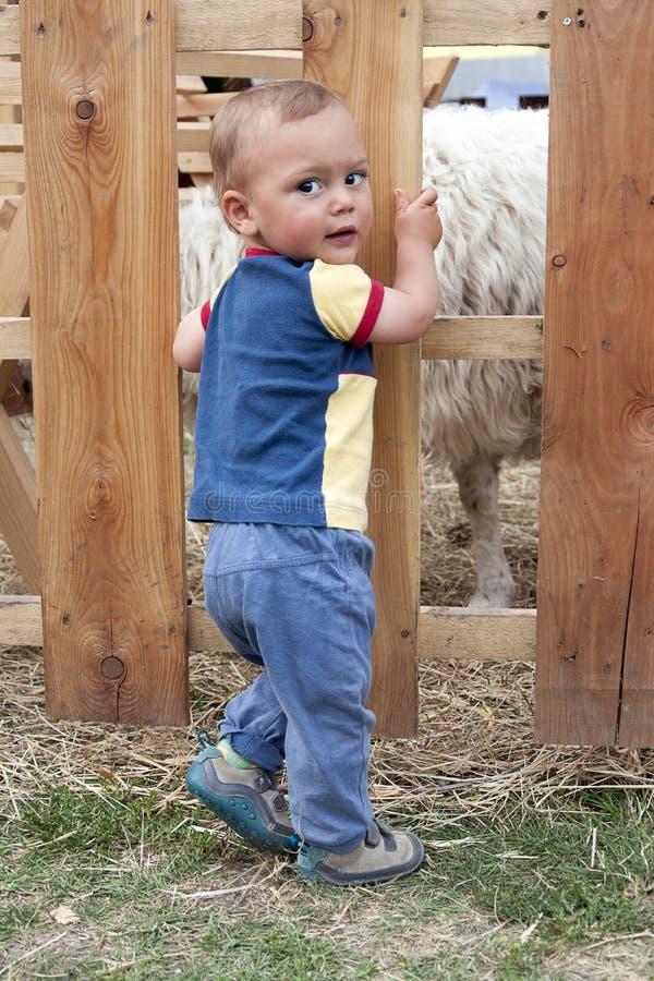 El niño en las ovejas cultiva o acaricia el parque zoológico imagen de archivo
