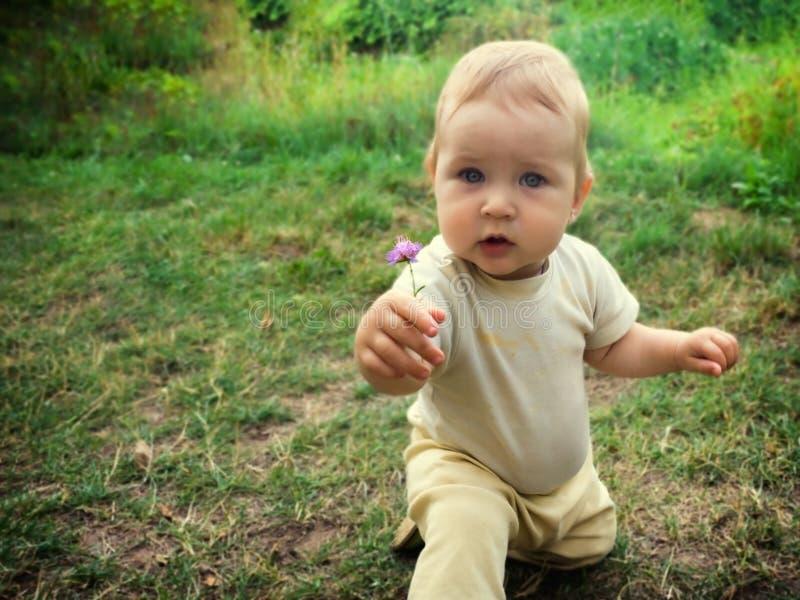 El niño encontró una flor en la hierba, desplumó la planta y la estiró adelante fotografía de archivo