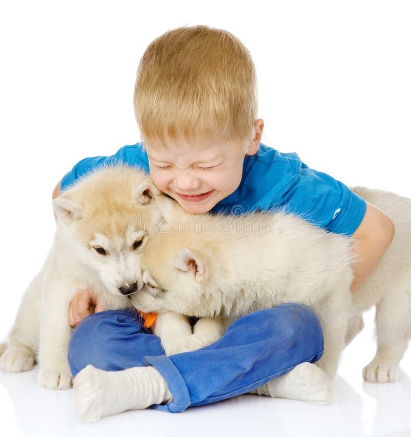 El niño pequeño abraza dos perritos de los perros esquimales En blanco imagen de archivo