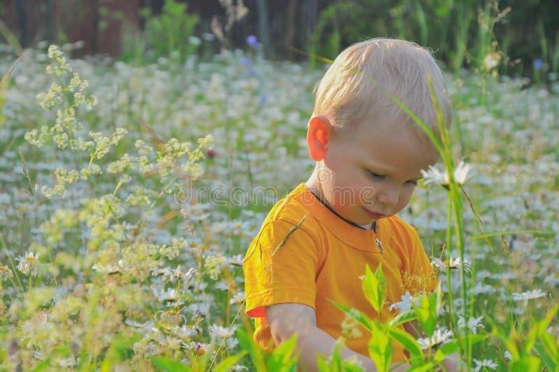 El niño pequeño del blonde cuesta en una alta hierba densa donde los camomiles crecen fotos de archivo