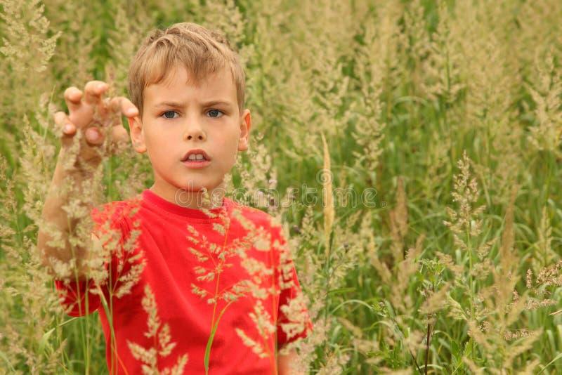 El niño pequeño se coloca en alta hierba verde imagen de archivo