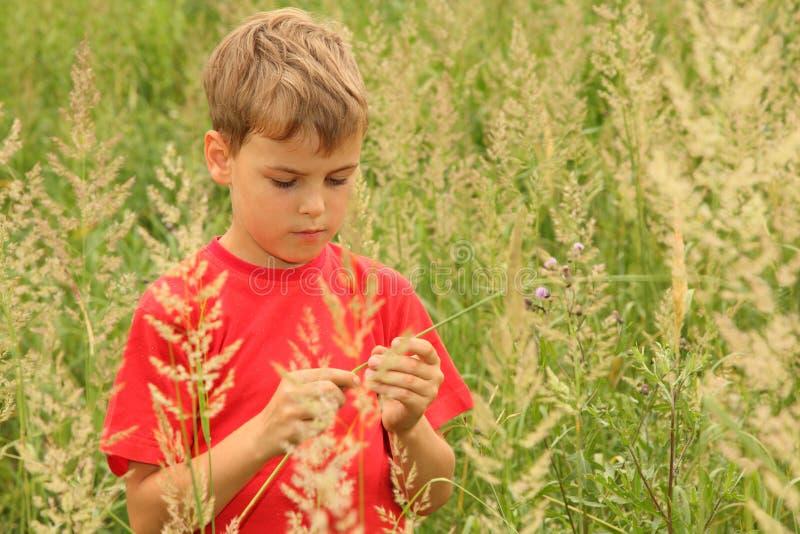El niño pequeño se coloca en alta hierba verde imágenes de archivo libres de regalías