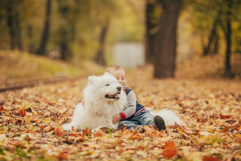 El niño pequeño se sienta al lado de perro y de juegos del samoyedo con él en otoño foto de archivo libre de regalías