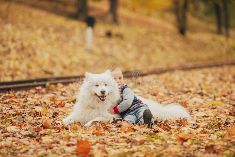 El niño pequeño se sienta al lado de perro y de juegos del samoyedo con él en otoño imagen de archivo libre de regalías