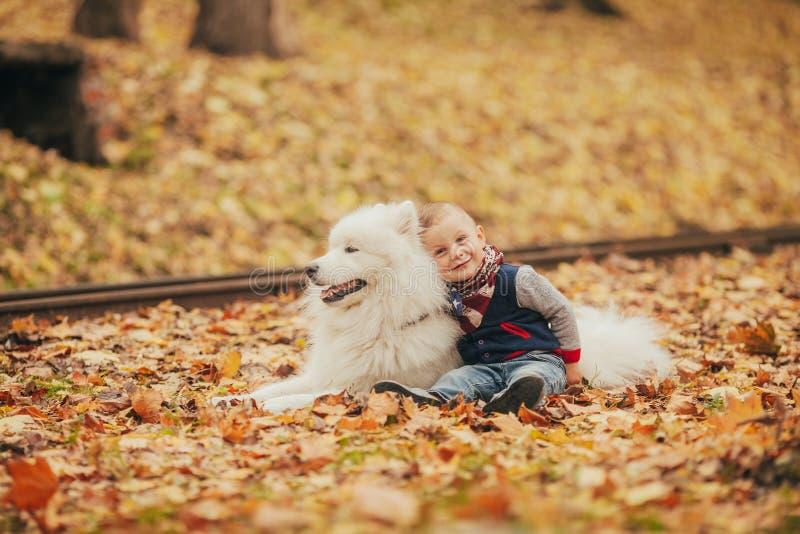 El niño pequeño se sienta al lado de perro y de juegos del samoyedo con él en otoño fotos de archivo libres de regalías
