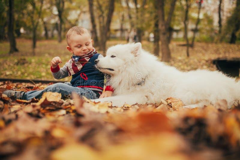 El niño pequeño se sienta al lado de perro y de juegos del samoyedo con él en otoño fotos de archivo