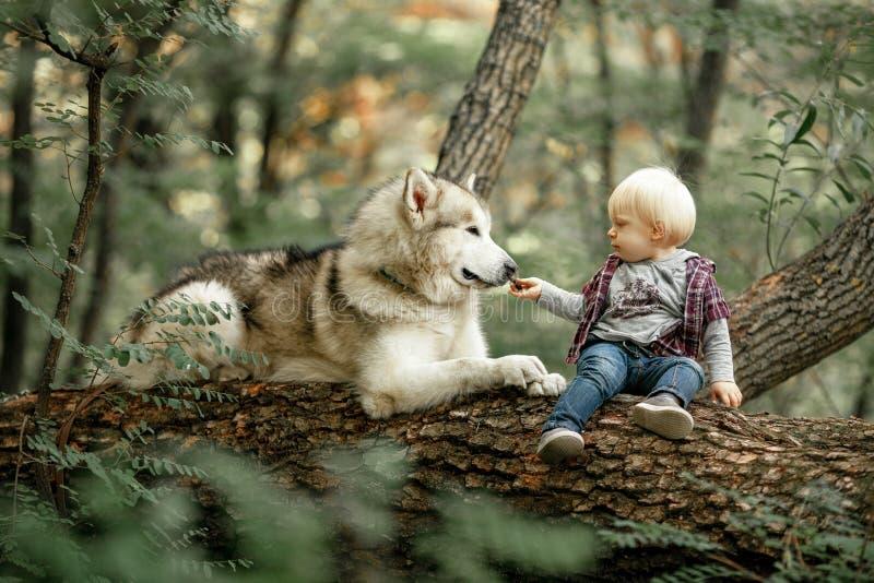 El niño pequeño se sienta en tronco de árbol al lado de malamute y de tarifa de mentira del perro imágenes de archivo libres de regalías