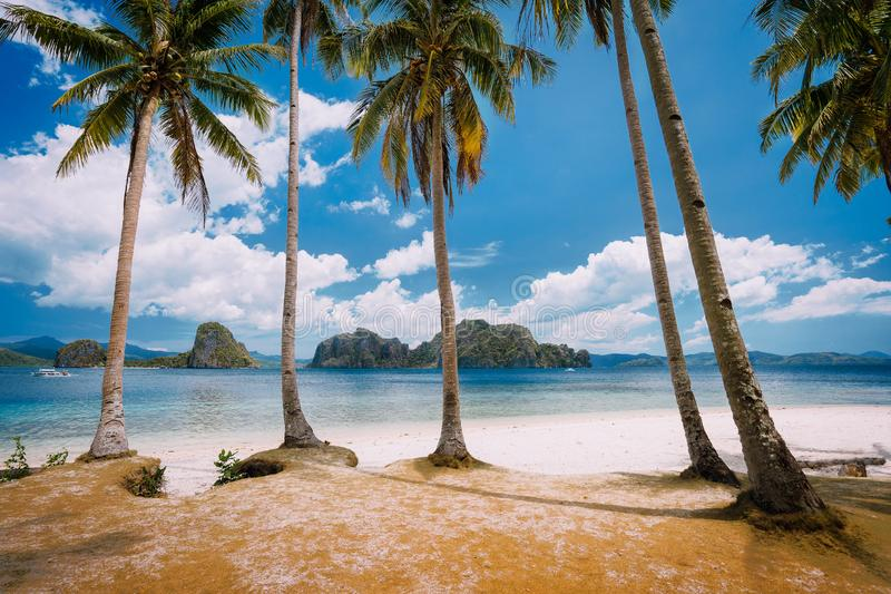 El Nido Beach Paradise: Pinagbuyutan Island with palm trees. Palawan, Philippines stock photos