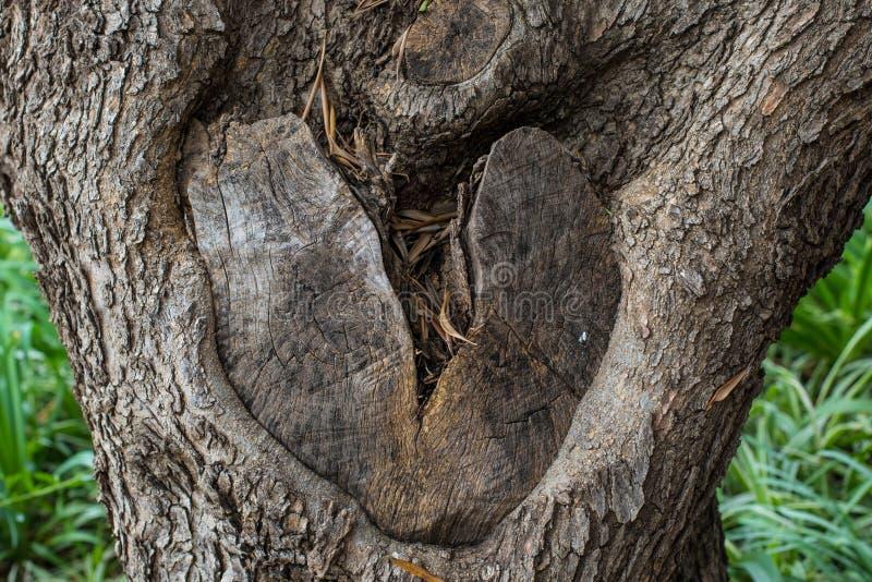 El nudo en tronco de árbol formó como un corazón quebrado imagenes de archivo