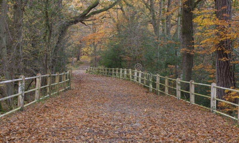 El nuevo bosque en otoño imagen de archivo