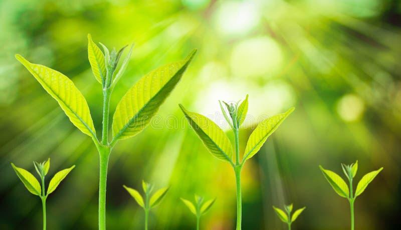 El nuevo pequeño crecimiento vegetal fresco para arriba en verde empañó la naturaleza fotografía de archivo libre de regalías