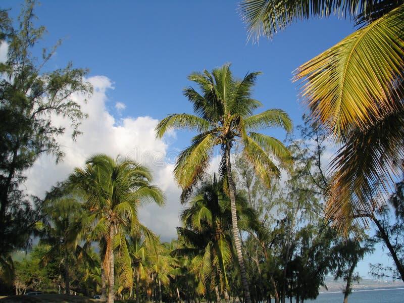 El Océano Índico, Reunion Island, bosque tropical amaizing fotos de archivo libres de regalías