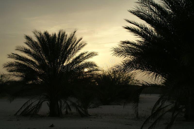 El ocaso en desierto foto de archivo