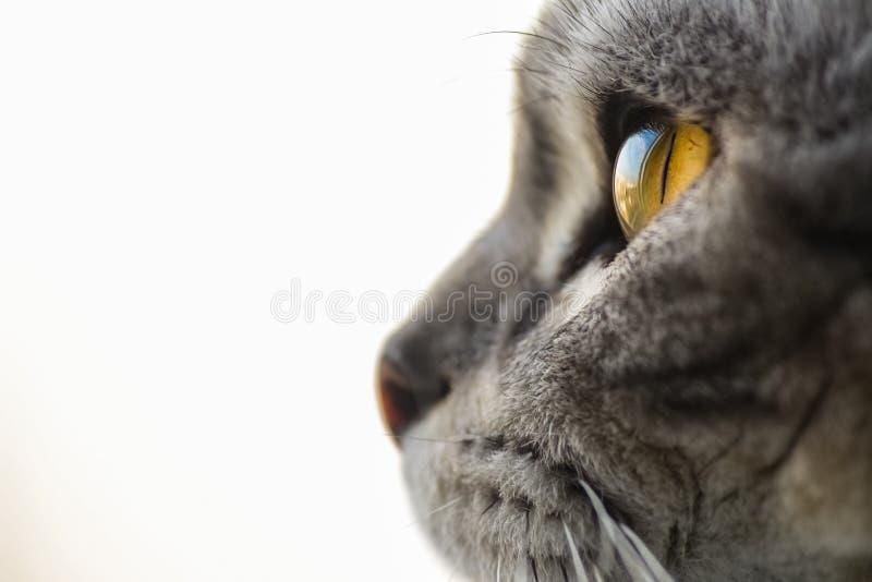 El ojo de gato fotografía de archivo libre de regalías