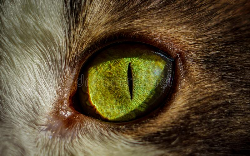 El ojo de gato macro Vista de colores verdes y amarillos del ojo de gato fotografía de archivo libre de regalías