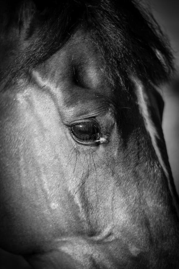 El ojo del caballo imagenes de archivo