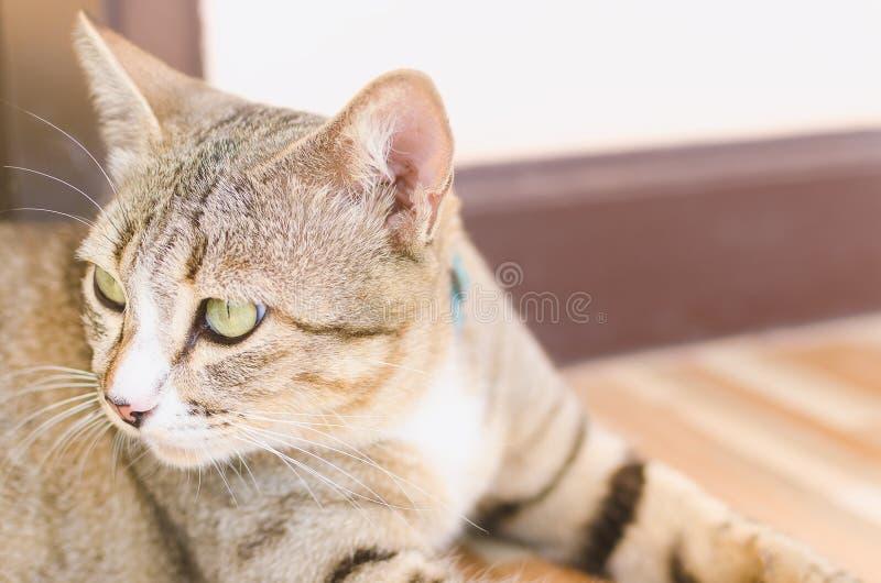 El ojo grande de un gato fotografía de archivo
