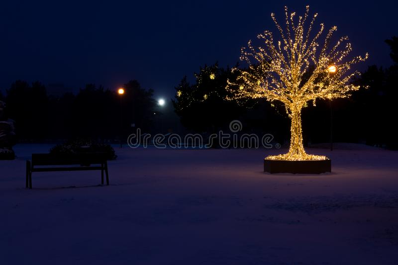 El oro enciende el árbol de navidad imagen de archivo