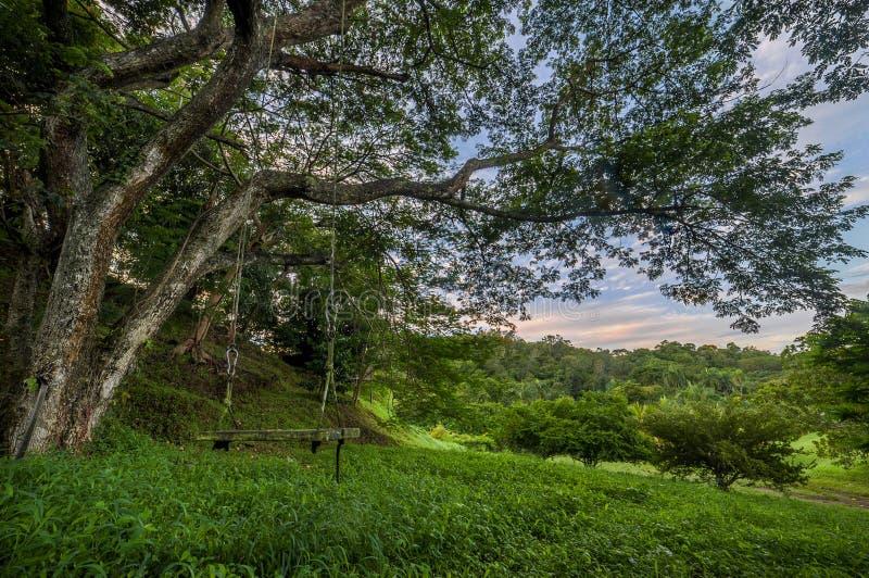 El oscilación cuelga de un árbol en la salida del sol fotos de archivo