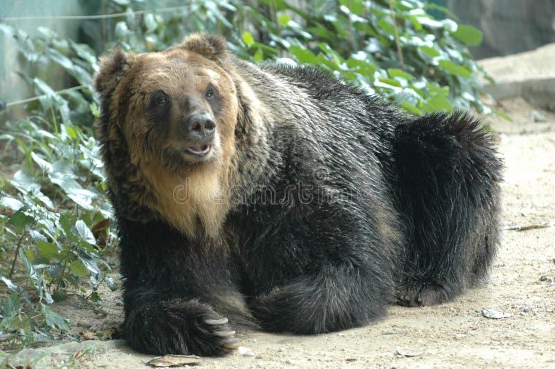 El oso lindo imagenes de archivo