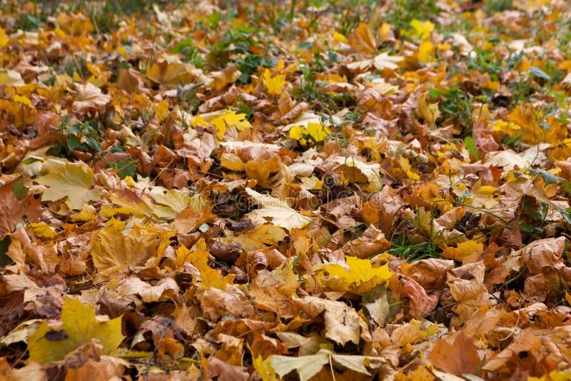 el otoño amarillo y el rojo se va contra el cielo azul imagenes de archivo