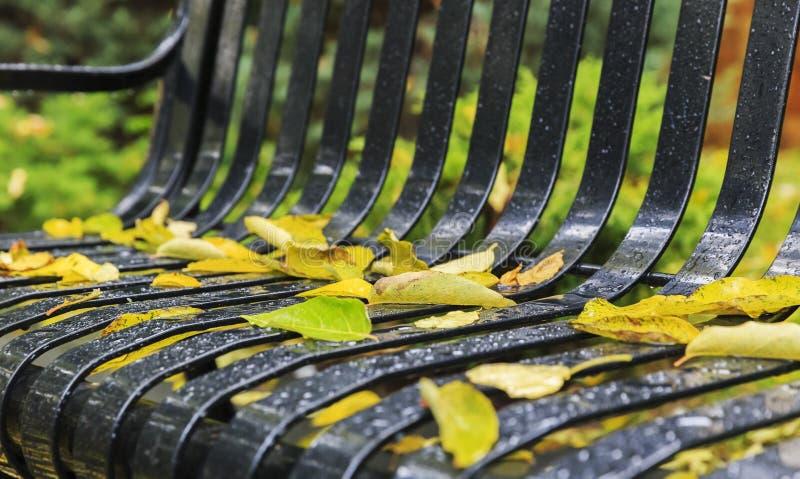 El otoño caido se va con gotas de la lluvia en un banco de parque fotos de archivo