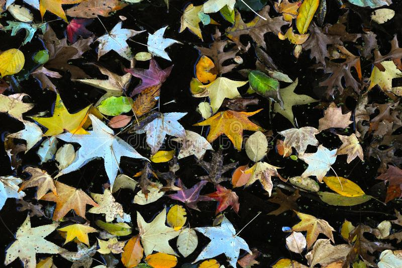 El otoño coloreó el agua con las hojas amarillas - mirada retra del vintage foto de archivo