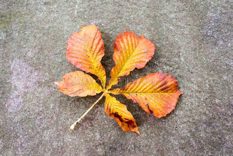 El otoño coloreó la hoja de la castaña caída en un muro de contención fotos de archivo libres de regalías