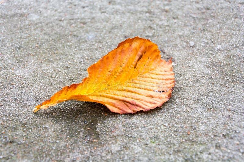El otoño coloreó la hoja de la castaña caída en un muro de contención fotos de archivo