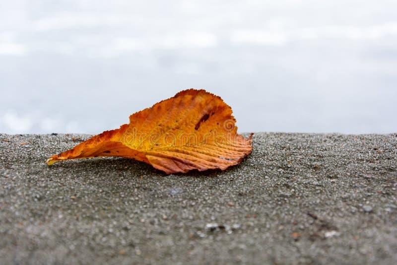 El otoño coloreó la hoja de la castaña caída en un muro de contención fotografía de archivo