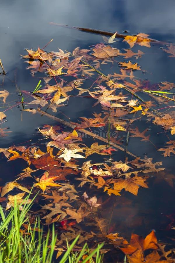 El otoño coloreó las hojas flota en el agua fotos de archivo