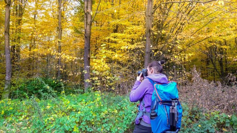 El otoño en la muchacha del bosque A está fotografiando un bosque hermoso imagen de archivo