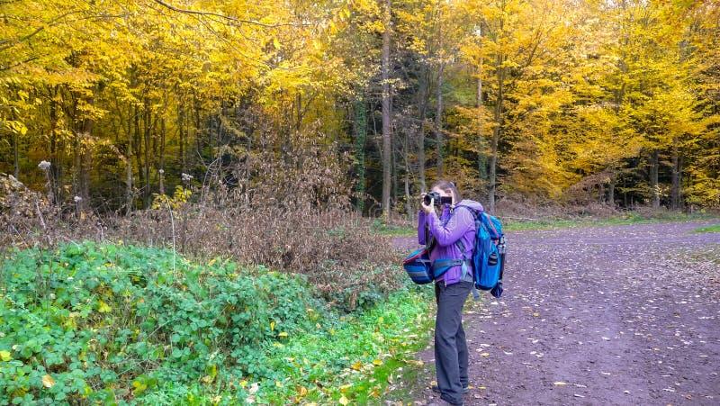 El otoño en la muchacha del bosque A está fotografiando un bosque hermoso fotos de archivo libres de regalías