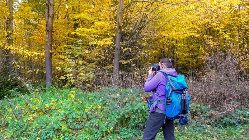 El otoño en la muchacha del bosque A está fotografiando un bosque hermoso imagen de archivo libre de regalías