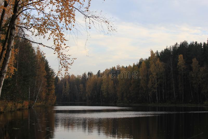 El otoño en la naturaleza del bosque se prepara para el invierno foto de archivo