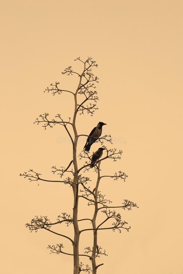 Download El otoño ha venido foto de archivo. Imagen de cuervo, cuervos - 1296718