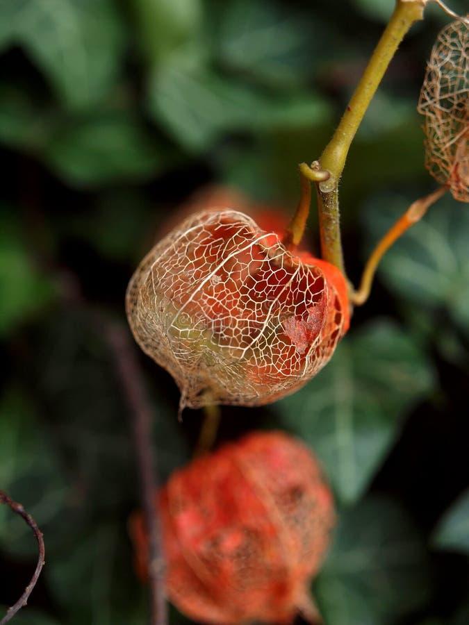 El otoño ha venido fotografía de archivo libre de regalías