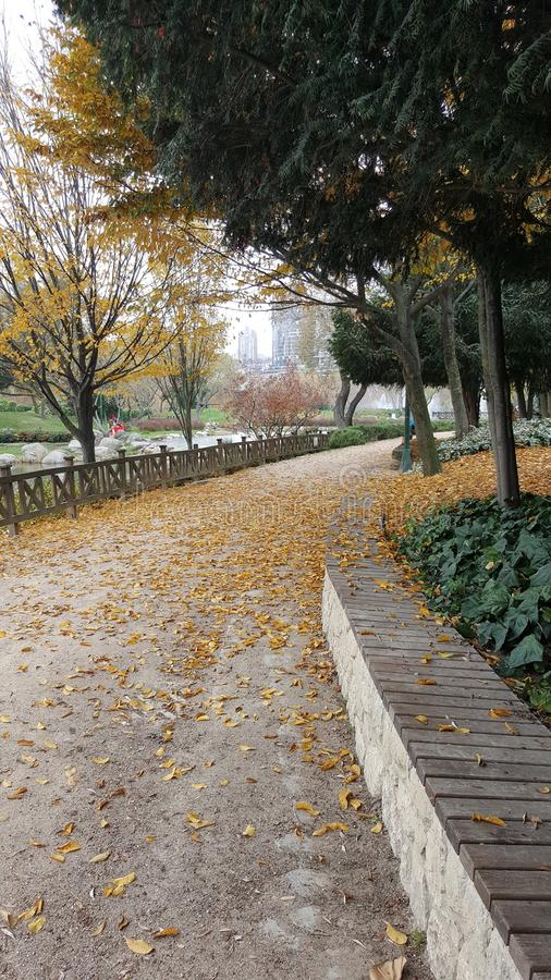 El otoño, hojas está en lugares imagenes de archivo