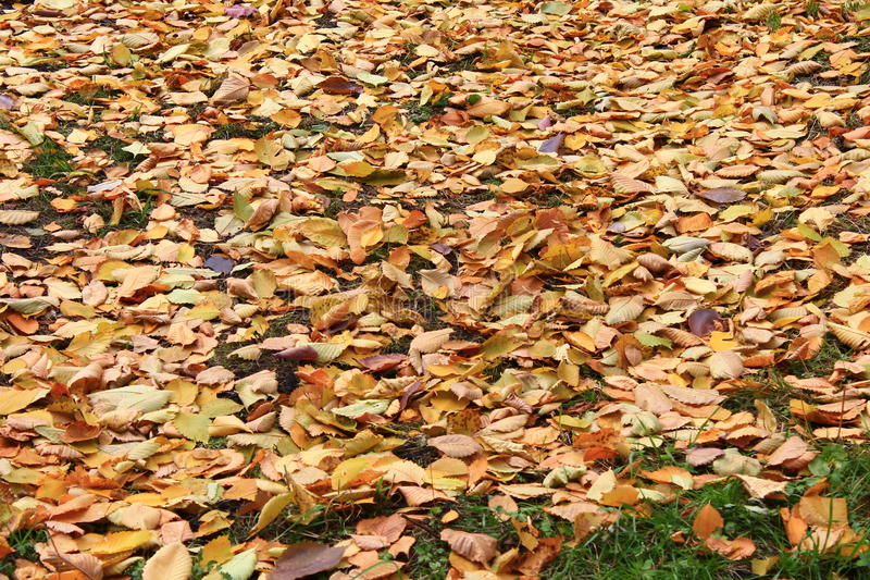 El otoño pasado imagen de archivo libre de regalías