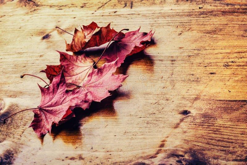 El otoño se va flojamente en un tablero de madera Foto entonada fotos de archivo libres de regalías