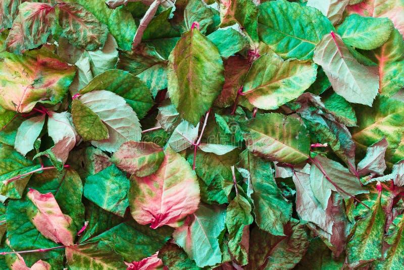 El otoño secó las hojas en la tierra Visión superior foto de archivo libre de regalías