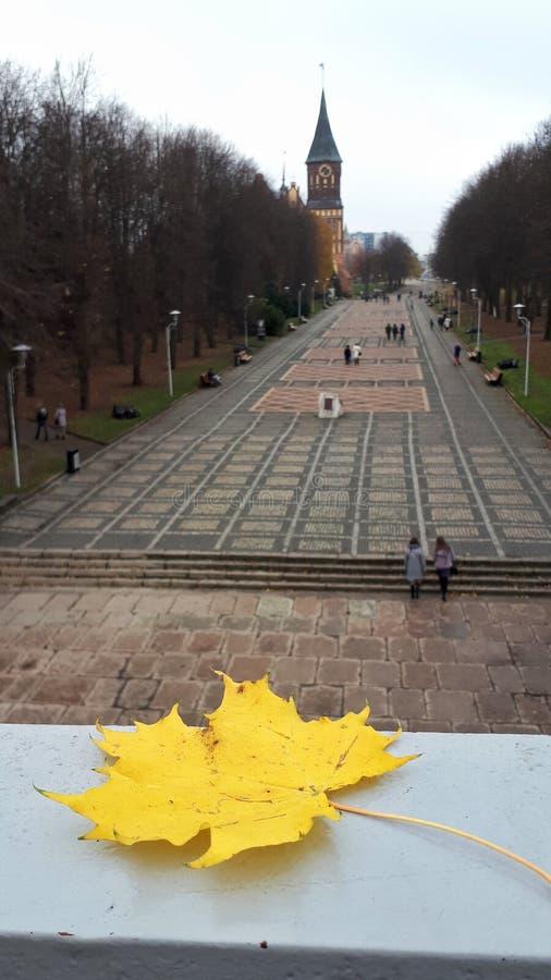 El otoño viene a la ciudad imagen de archivo