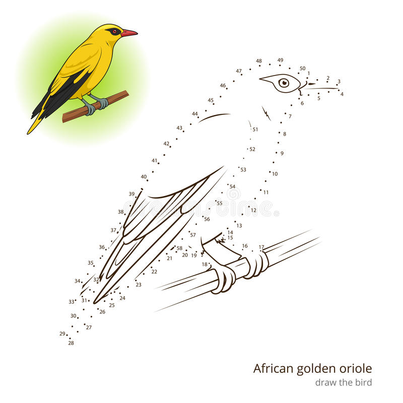 El pájaro africano de Oriole de oro aprende dibujar vector libre illustration