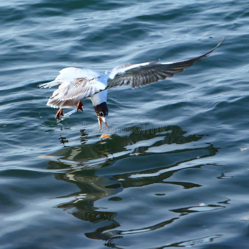 El pájaro consigue el alimento fotografía de archivo libre de regalías