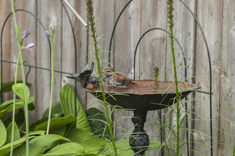 El pájaro consigue un baño foto de archivo