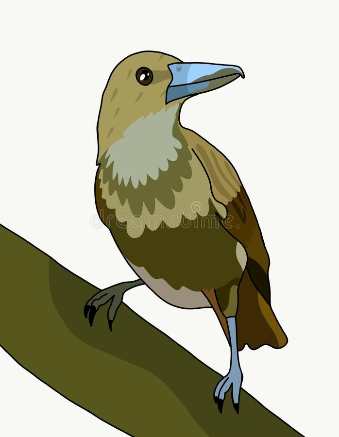 El pájaro de la flauta libre illustration
