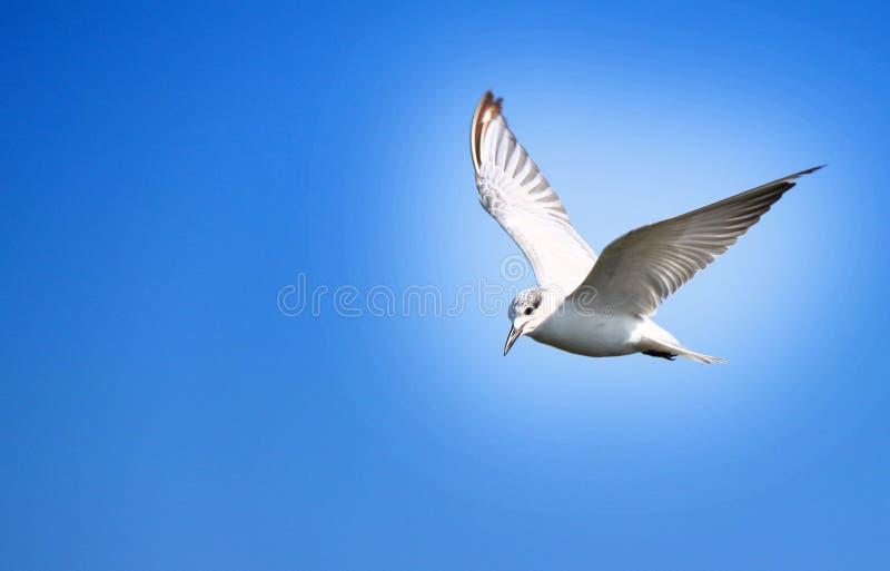 El pájaro de la libertad foto de archivo