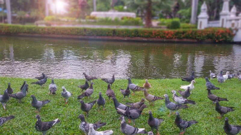 El pájaro en el campo por la tarde imagen de archivo