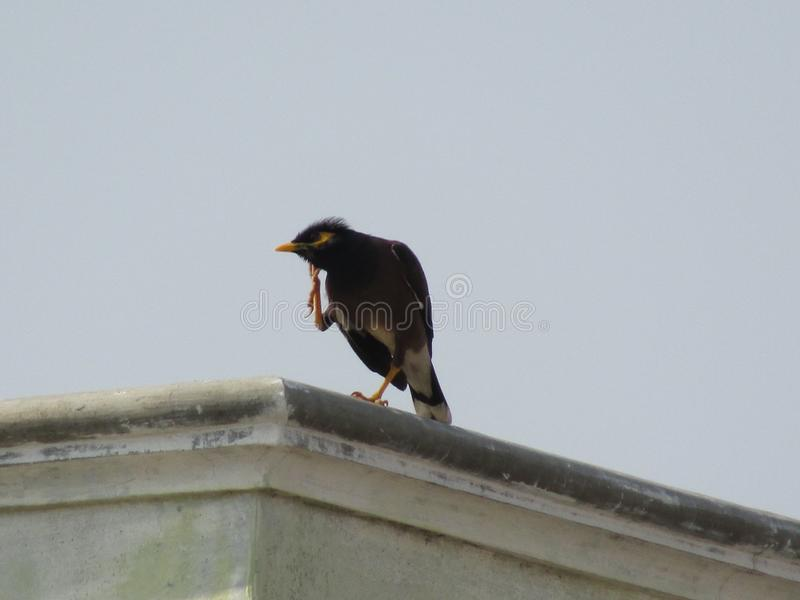 El pájaro es alturas de colocación en el tejado de la casa fotografía de archivo libre de regalías